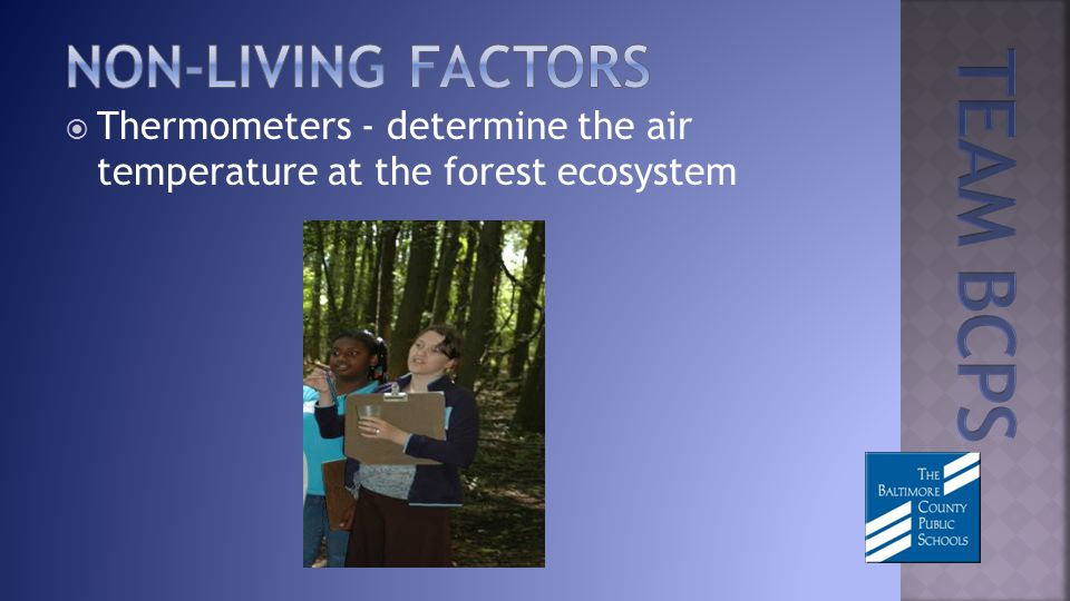 Thermometers - determine the air temperature at the forest ecosystem