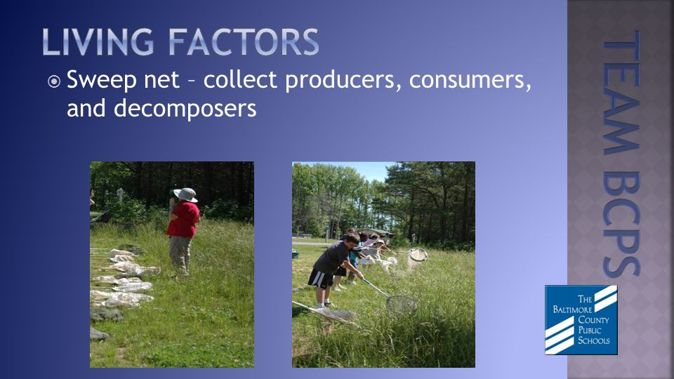 Sweep net – collect producers, consumers, and decomposers