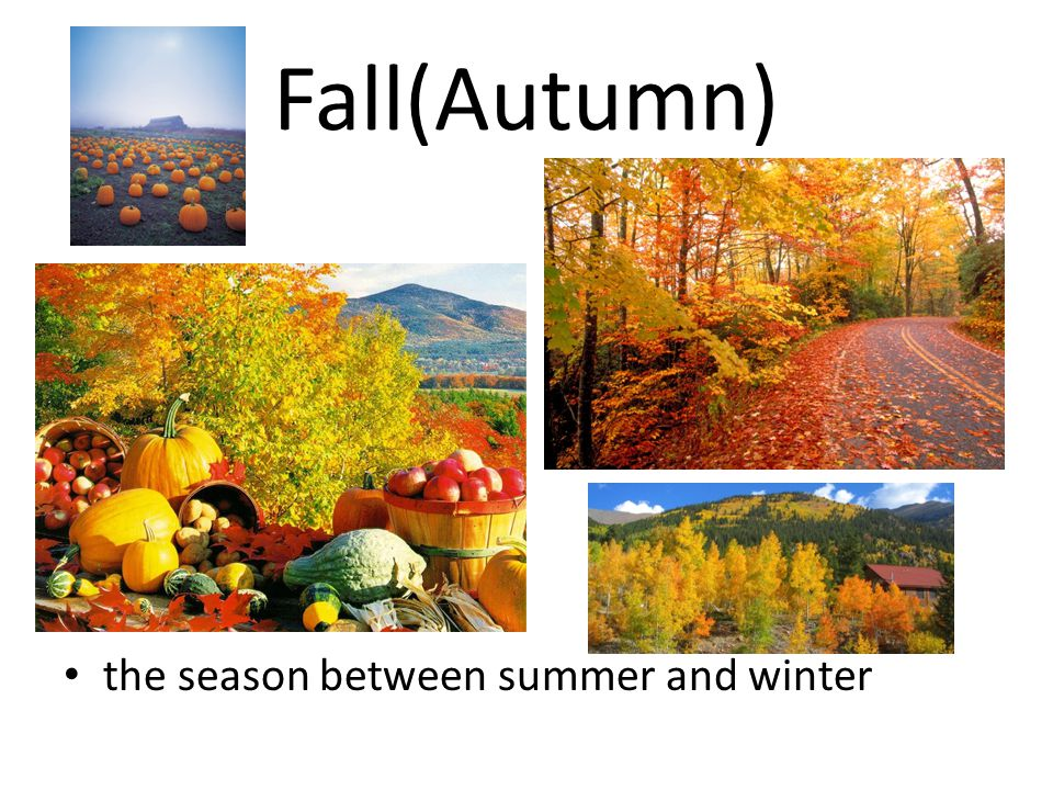 Fall(Autumn) the season between summer and winter