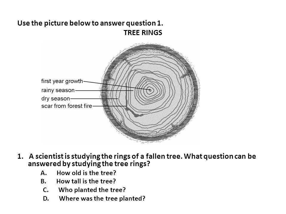 Use the picture below to answer question 1. TREE RINGS 1. A scientist is studying the rings of a fallen tree. What question can be answered by studyin