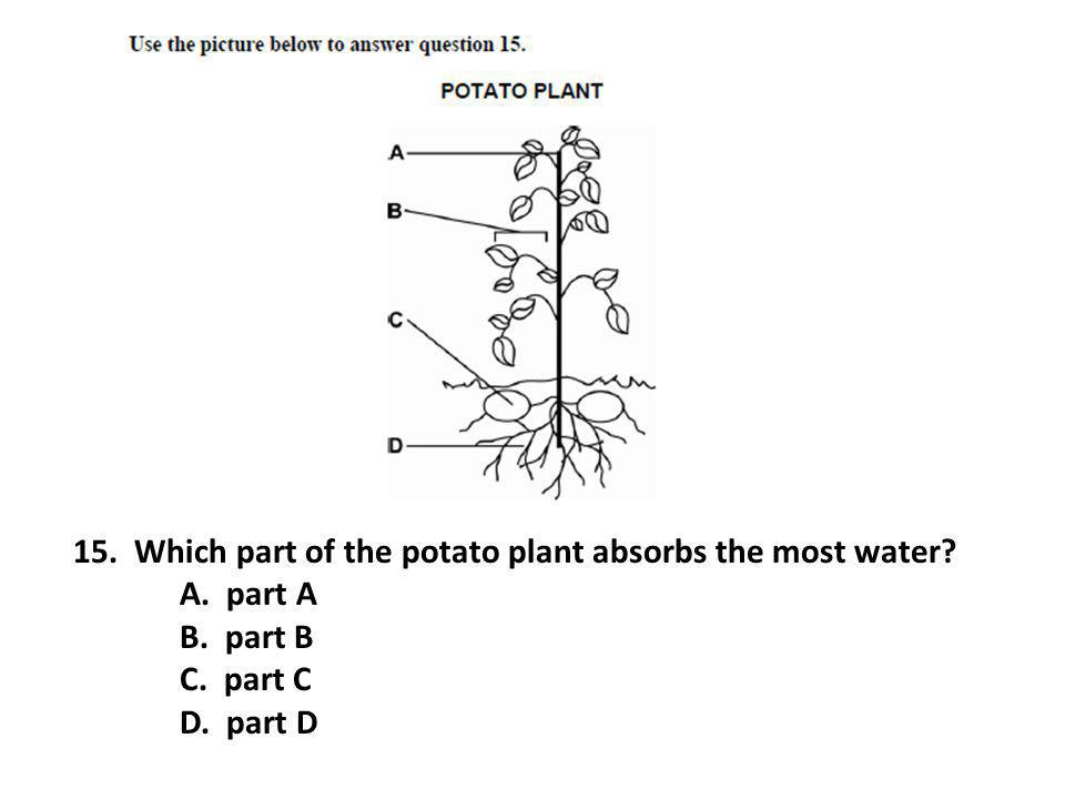 15. Which part of the potato plant absorbs the most water? A. part A B. part B C. part C D. part D