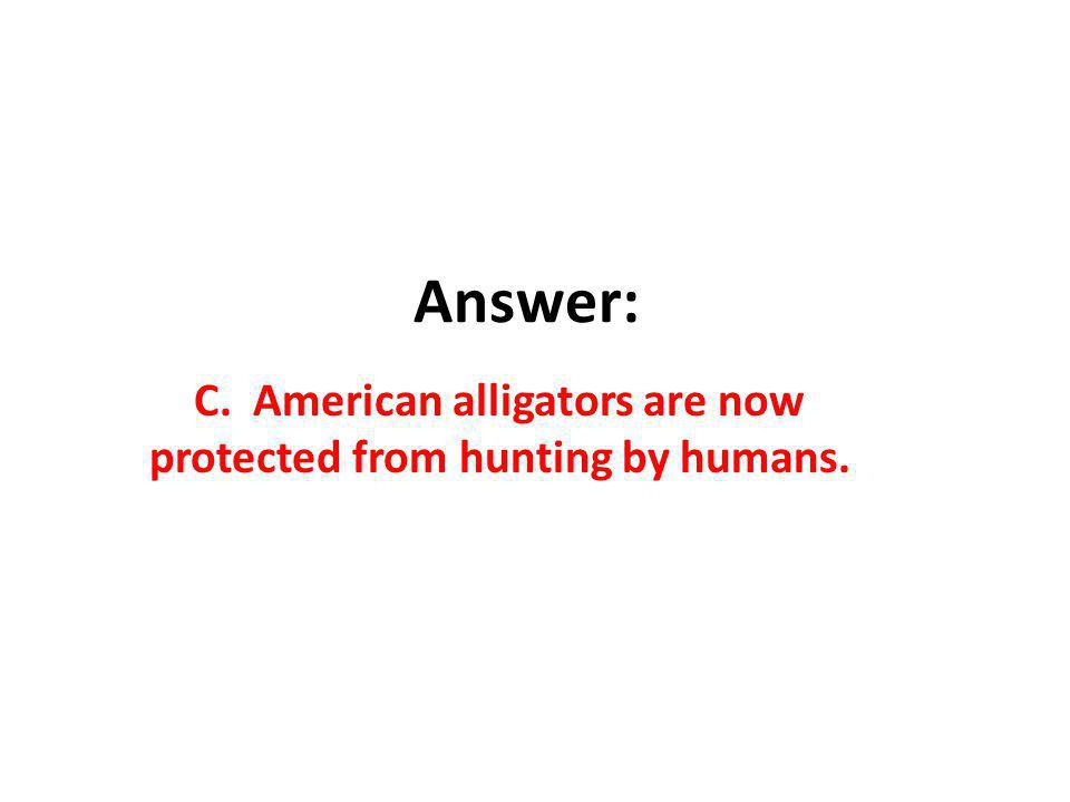 Answer: C. American alligators are now protected from hunting by humans.