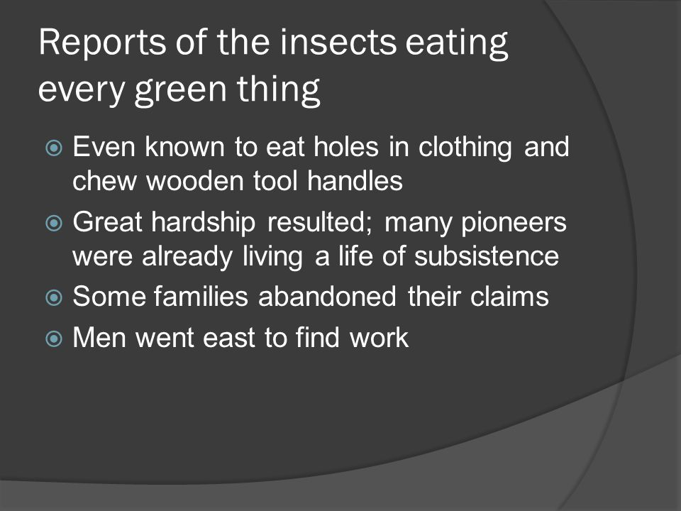 Reports of the insects eating every green thing Even known to eat holes in clothing and chew wooden tool handles Great hardship resulted; many pioneers were already living a life of subsistence Some families abandoned their claims Men went east to find work