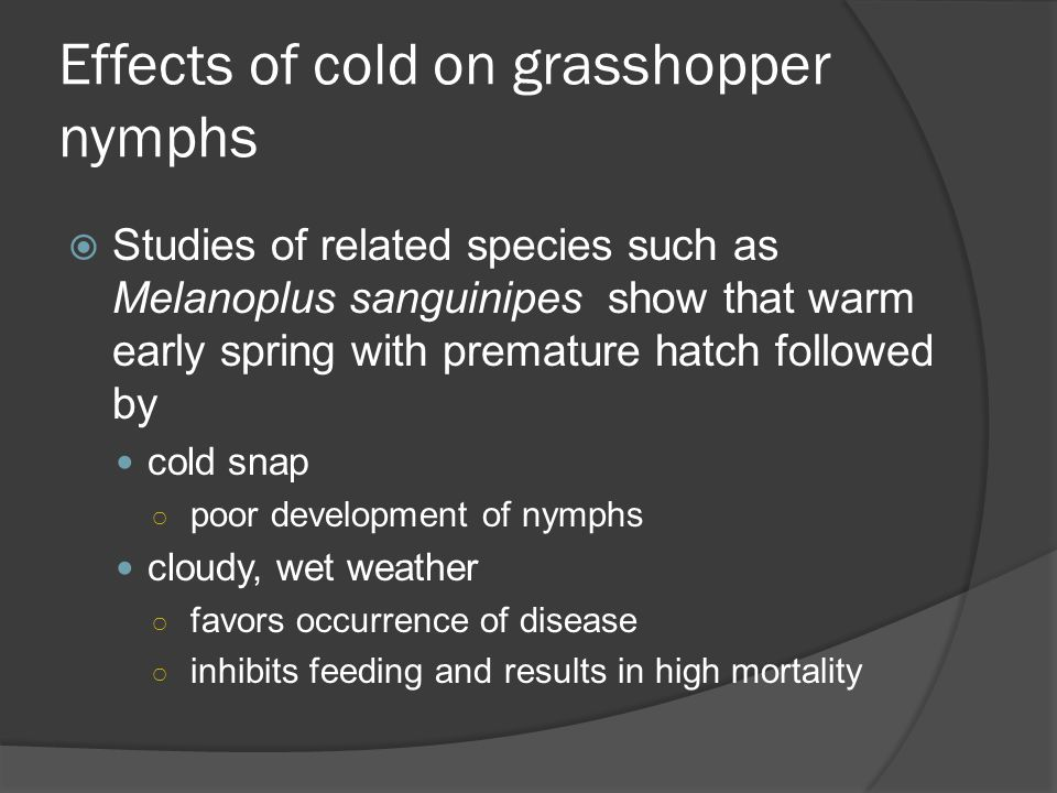 Effects of cold on grasshopper nymphs Studies of related species such as Melanoplus sanguinipes show that warm early spring with premature hatch followed by cold snap poor development of nymphs cloudy, wet weather favors occurrence of disease inhibits feeding and results in high mortality
