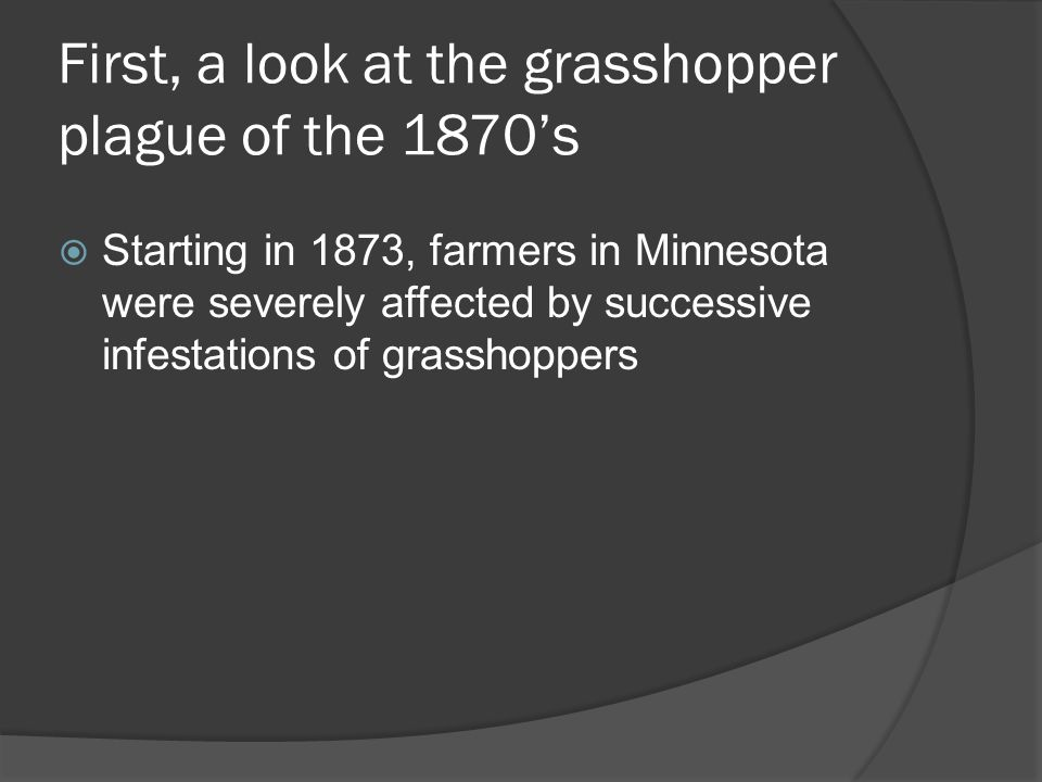 First, a look at the grasshopper plague of the 1870s Starting in 1873, farmers in Minnesota were severely affected by successive infestations of grasshoppers