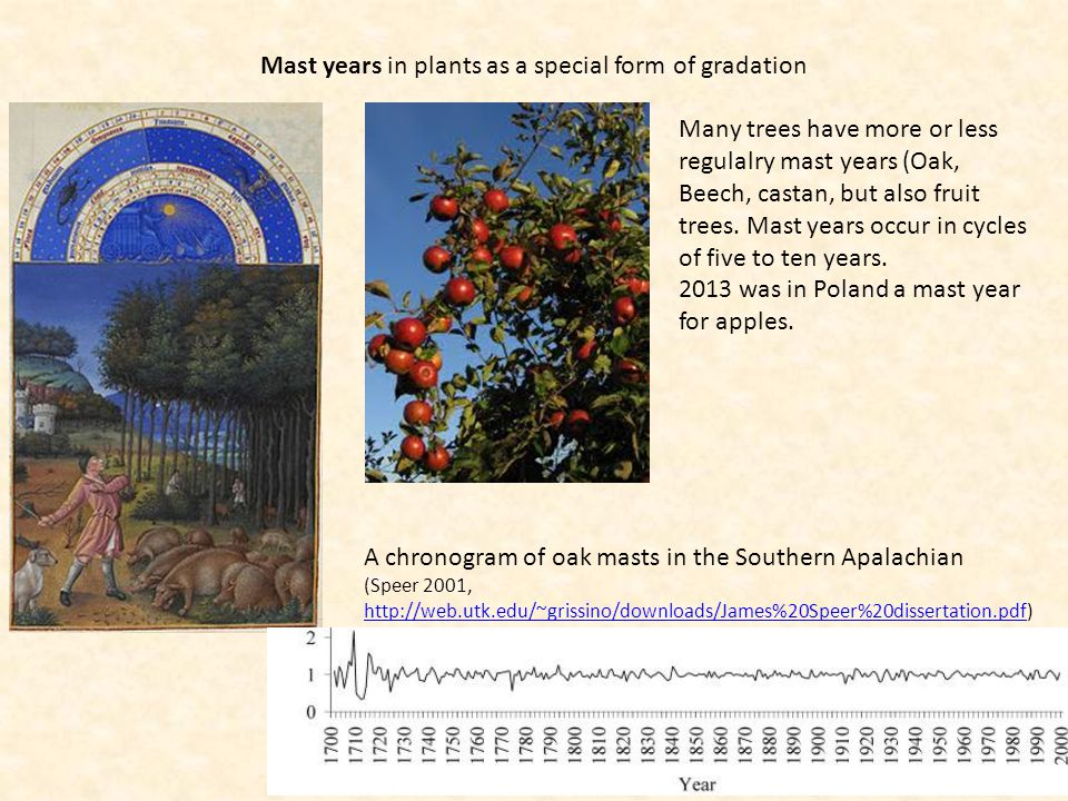 Mast years in plants as a special form of gradation Many trees have more or less regulalry mast years (Oak, Beech, castan, but also fruit trees. Mast