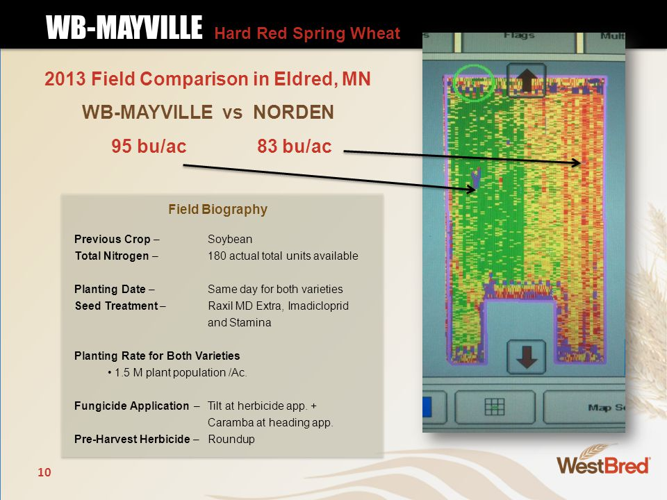 10 2013 Field Comparison in Eldred, MN WB-MAYVILLE vs NORDEN WB-MAYVILLE Hard Red Spring Wheat WB-MAYVILLE Hard Red Spring Wheat Field Biography Previous Crop – Soybean Total Nitrogen –180 actual total units available Planting Date – Same day for both varieties Seed Treatment – Raxil MD Extra, Imadicloprid and Stamina Planting Rate for Both Varieties 1.5 M plant population /Ac.