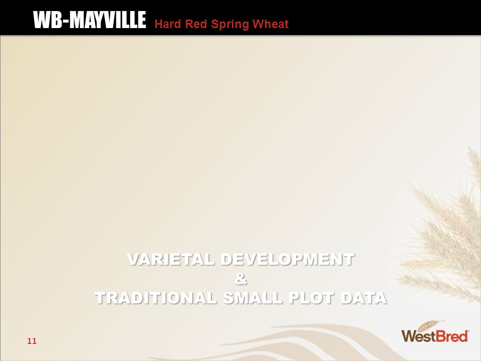 11 VARIETAL DEVELOPMENT & TRADITIONAL SMALL PLOT DATA WB-MAYVILLE Hard Red Spring Wheat WB-MAYVILLE Hard Red Spring Wheat