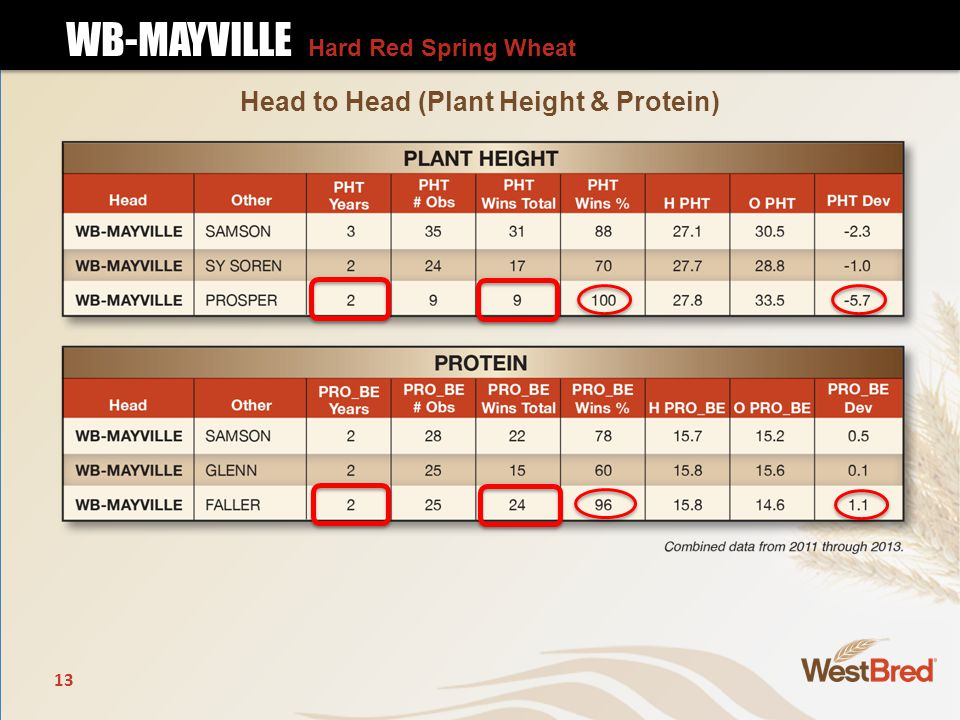 13 Head to Head (Plant Height & Protein) WB-MAYVILLE Hard Red Spring Wheat