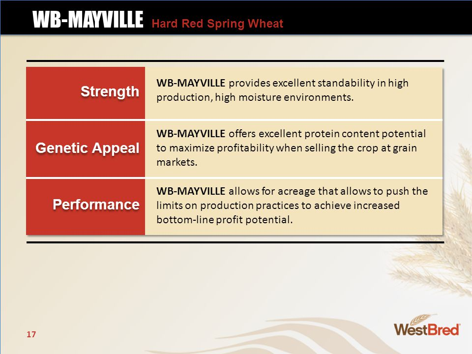 Strength Genetic Appeal Performance Strength Genetic Appeal Performance WB-MAYVILLE provides excellent standability in high production, high moisture environments.