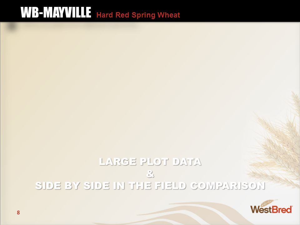 8 LARGE PLOT DATA & SIDE BY SIDE IN THE FIELD COMPARISON WB-MAYVILLE Hard Red Spring Wheat WB-MAYVILLE Hard Red Spring Wheat