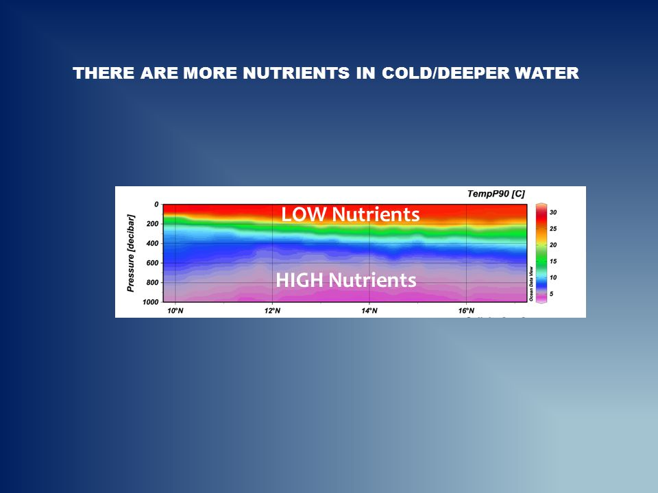 THERE ARE MORE NUTRIENTS IN COLD/DEEPER WATER HIGH Nutrients LOW Nutrients