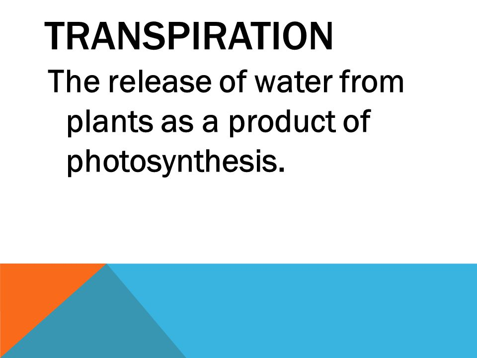 TRANSPIRATION The release of water from plants as a product of photosynthesis.