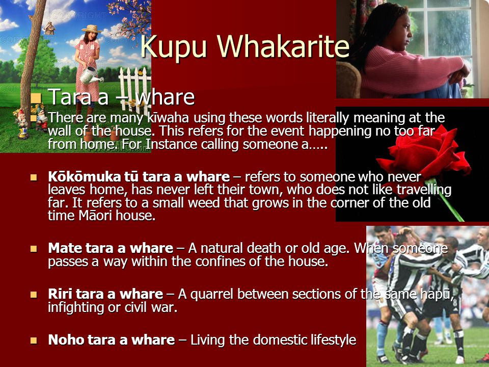 Kupu Whakarite Māori used metaphor and analogy in everyday conversation.
