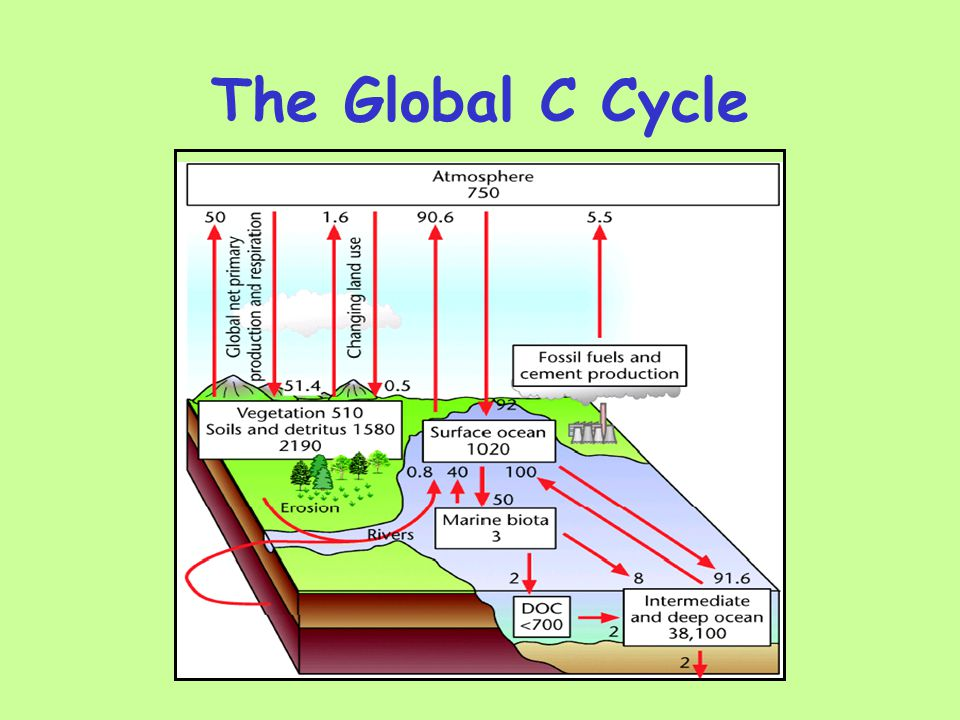 The Global C Cycle