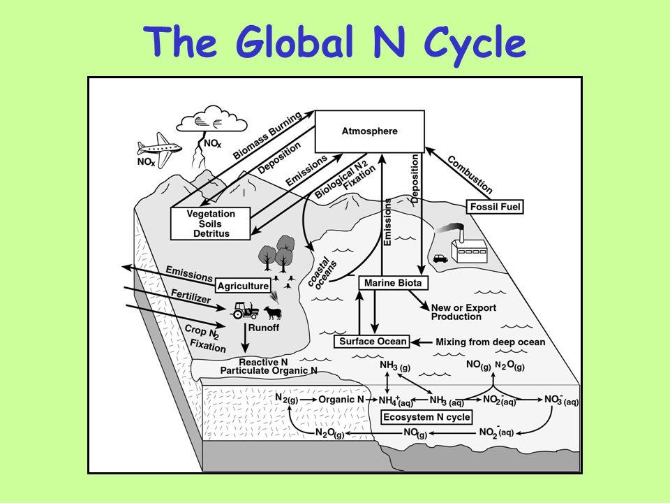 The Global N Cycle