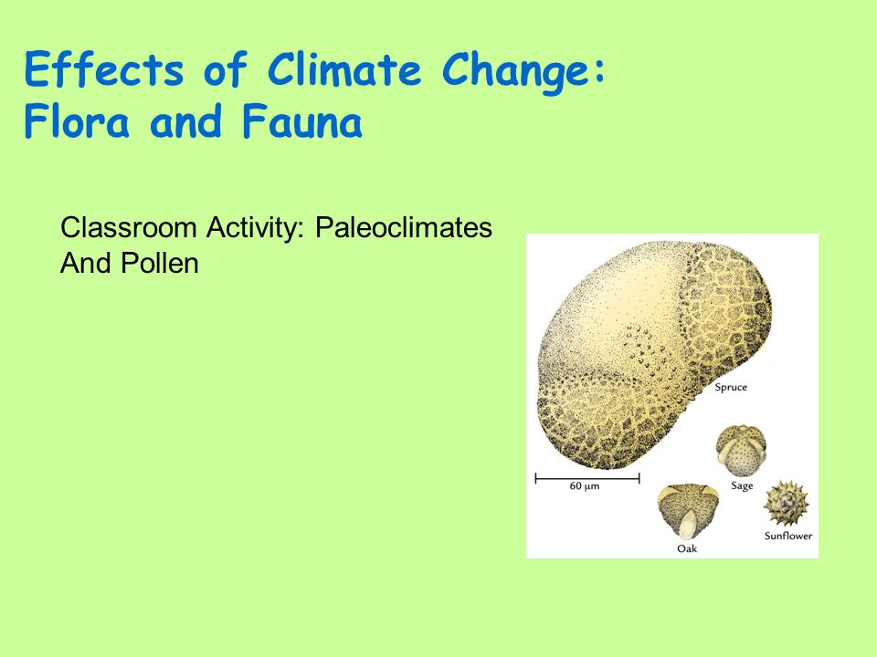 Effects of Climate Change: Flora and Fauna Classroom Activity: Paleoclimates And Pollen