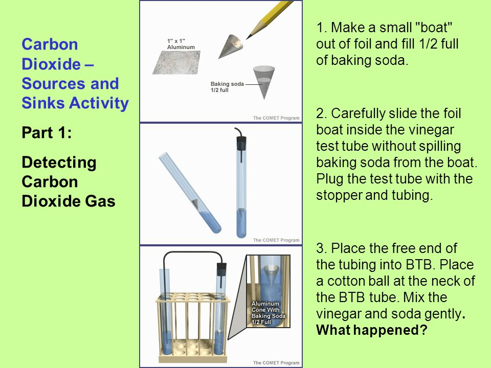 Carbon Dioxide – Sources and Sinks Activity Part 1: Detecting Carbon Dioxide Gas 1. Make a small