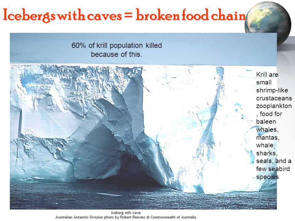 Icebergs with caves = broken food chain 60% of krill population killed because of this.