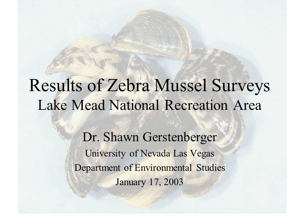 Results of Zebra Mussel Surveys Lake Mead National Recreation Area Dr. Shawn Gerstenberger University of Nevada Las Vegas Department of Environmental