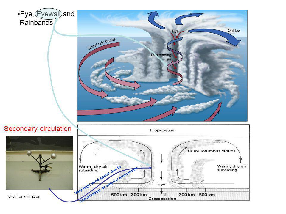 Eye, Eyewall and Rainbands Secondary circulation Very high wind speed due to conservation of angular momentum click for animation
