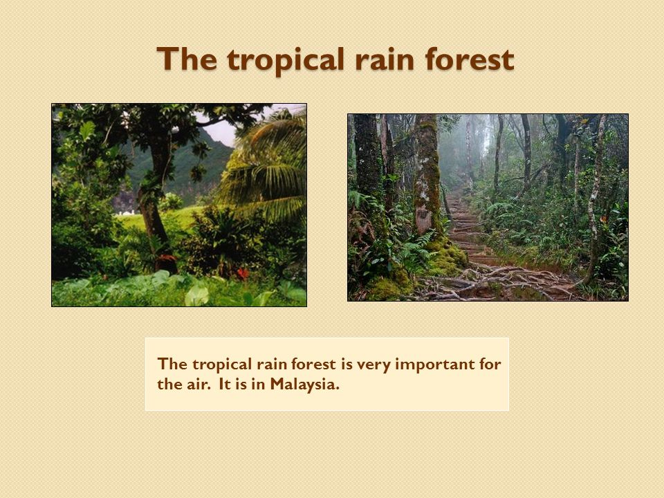 The tropical rain forest The tropical rain forest is very important for the air. It is in Malaysia.