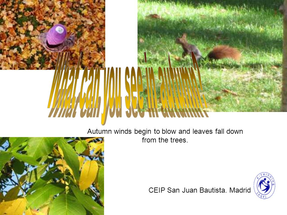 Autumn winds begin to blow and leaves fall down from the trees. CEIP San Juan Bautista. Madrid