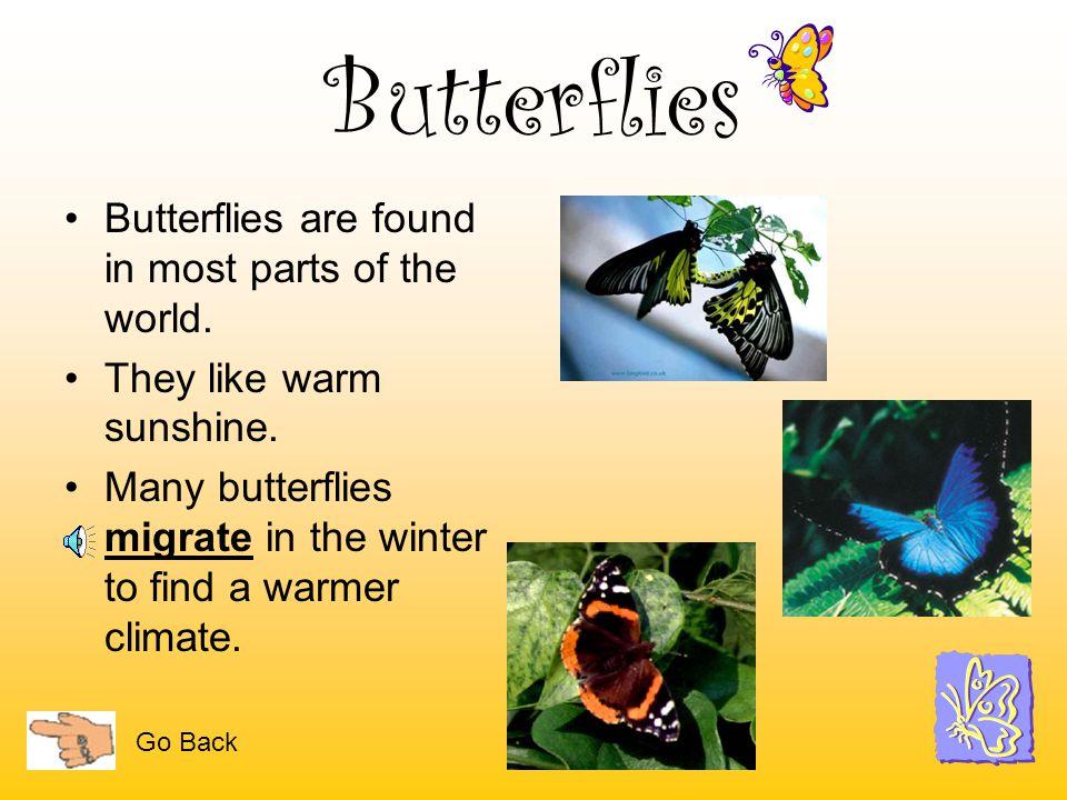 Butterflies Created by Melinda Frydenlund