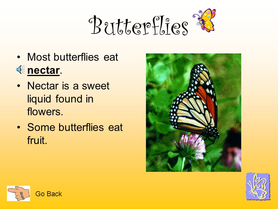 Butterflies are insects. Like all insects, they have six legs, 3 body parts, a pair of antennae, and 2 eyes. The three body parts are the head, thorax