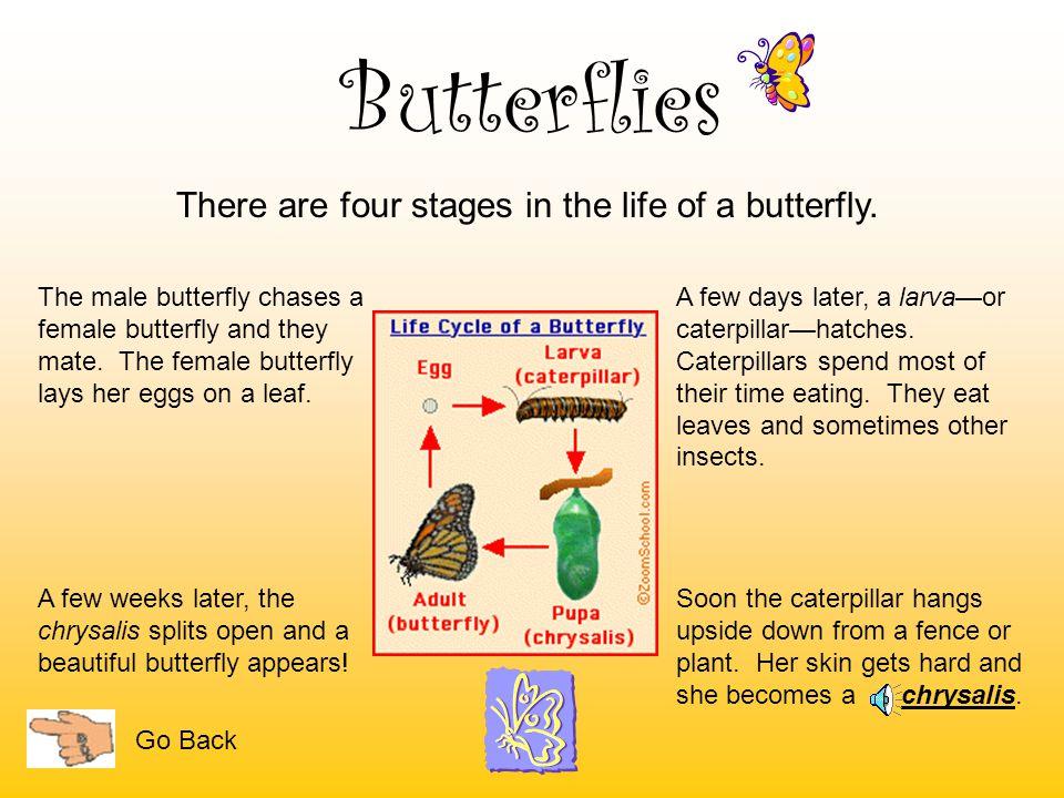 Butterflies Most butterflies eat nectar. Nectar is a sweet liquid found in flowers. Some butterflies eat fruit. Go Back