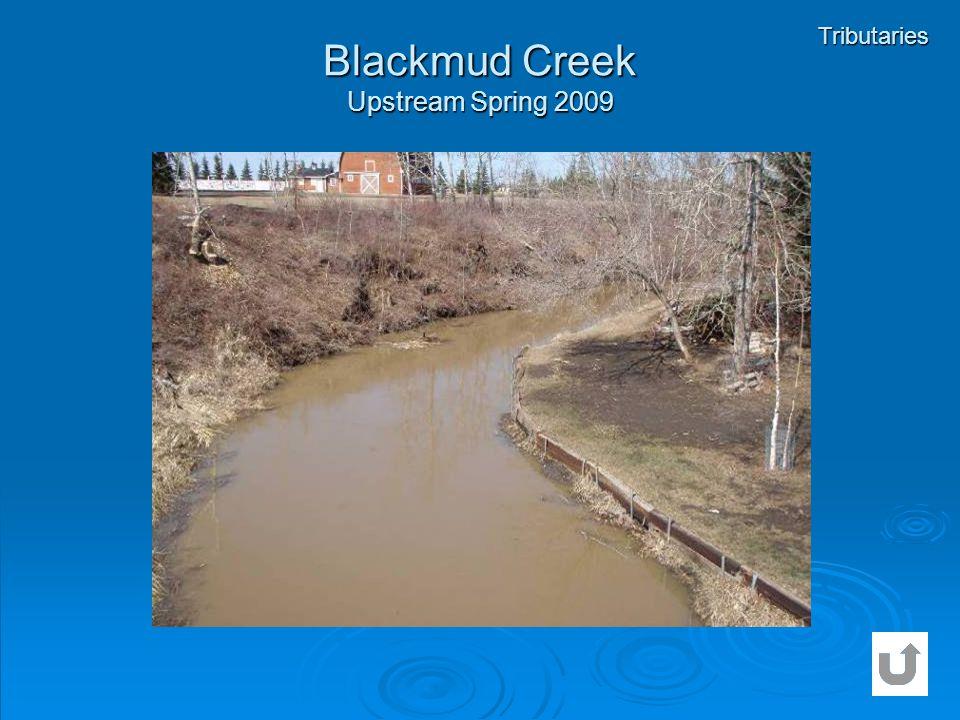 Blackmud Creek Upstream Spring 2009 Tributaries