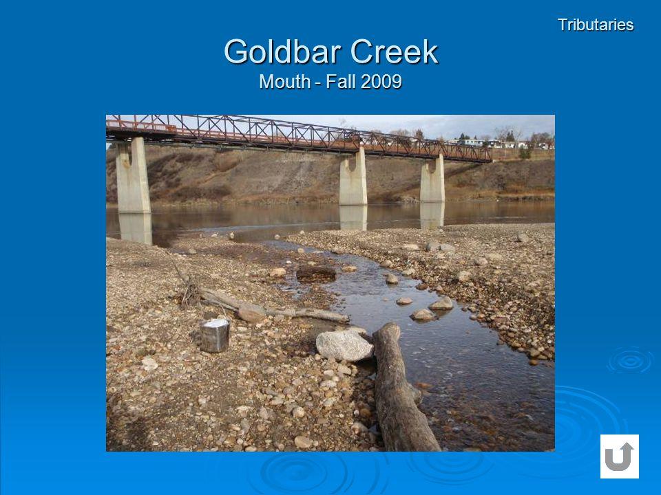 Goldbar Creek Mouth - Fall 2009 Tributaries