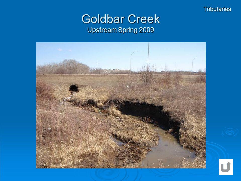 Goldbar Creek Upstream Spring 2009 Tributaries