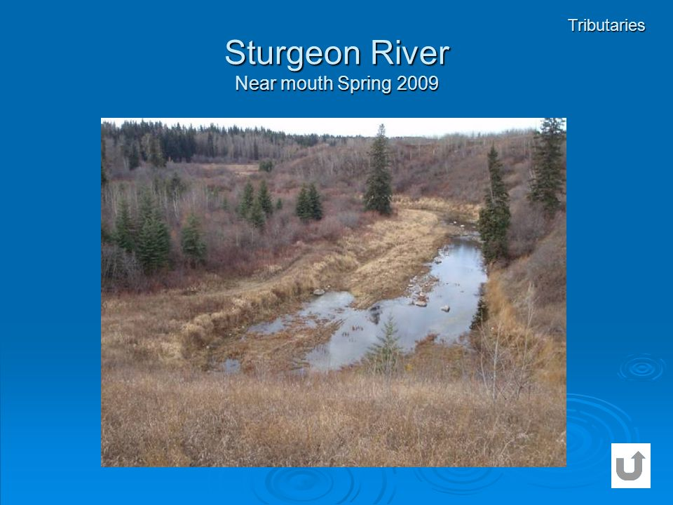 Sturgeon River Near mouth Spring 2009 Tributaries