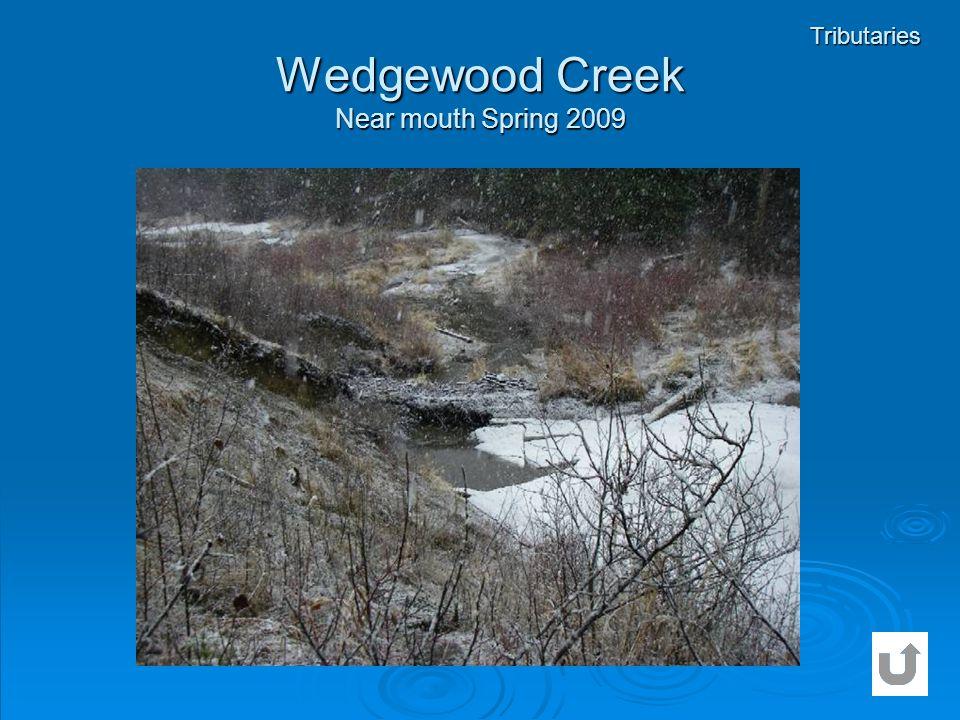 Wedgewood Creek Near mouth Spring 2009 Tributaries