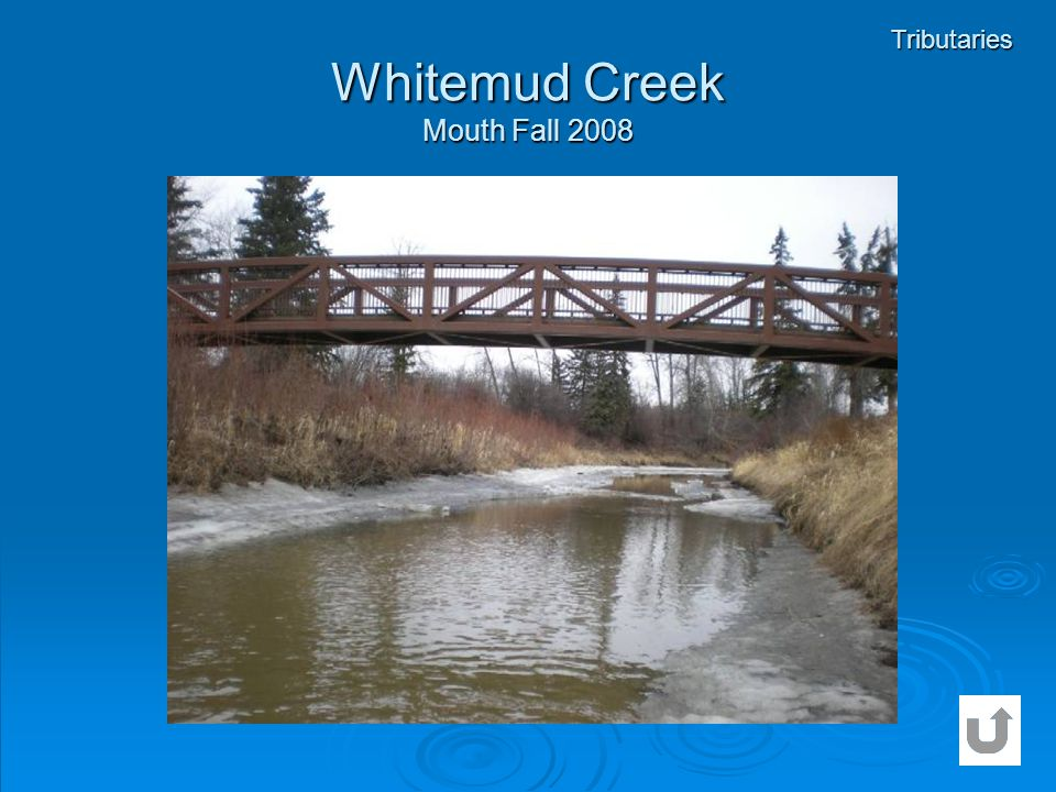 Whitemud Creek Mouth Fall 2008 Tributaries