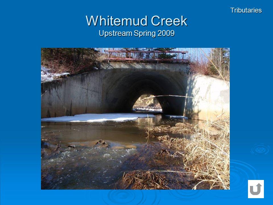 Whitemud Creek Upstream Spring 2009 Tributaries
