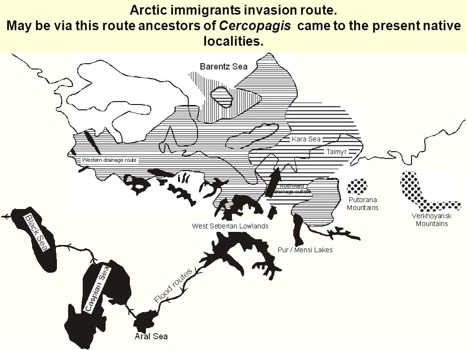 Arctic immigrants invasion route.
