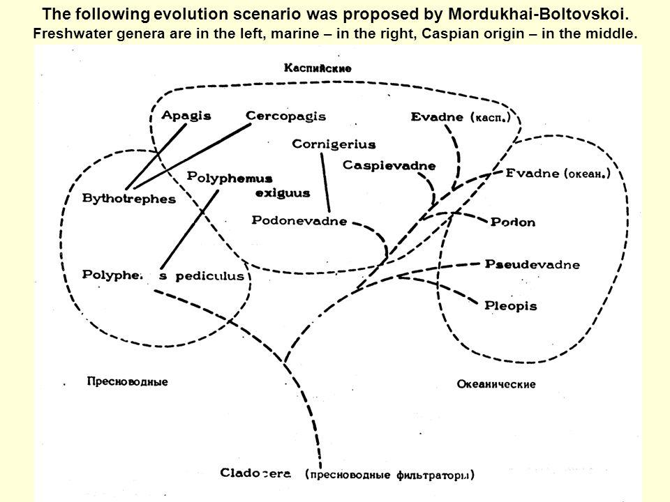 The following evolution scenario was proposed by Mordukhai-Boltovskoi.