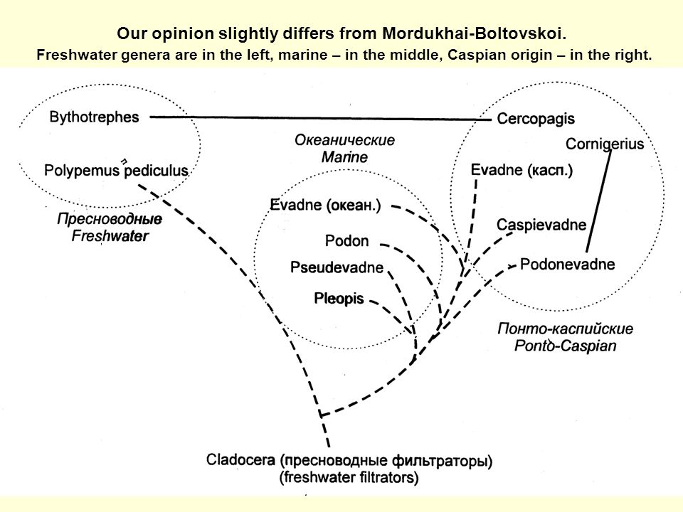 Our opinion slightly differs from Mordukhai-Boltovskoi.