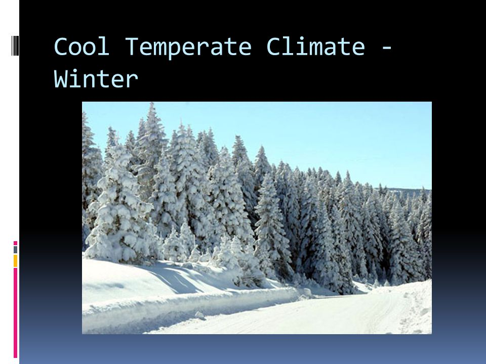 Cool Temperate Climate - Winter