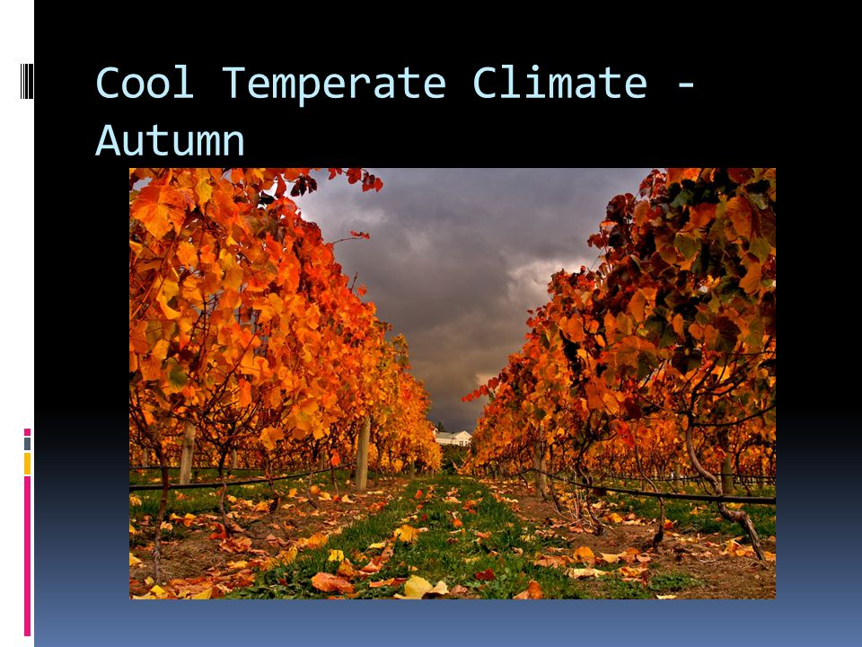 Cool Temperate Climate - Autumn