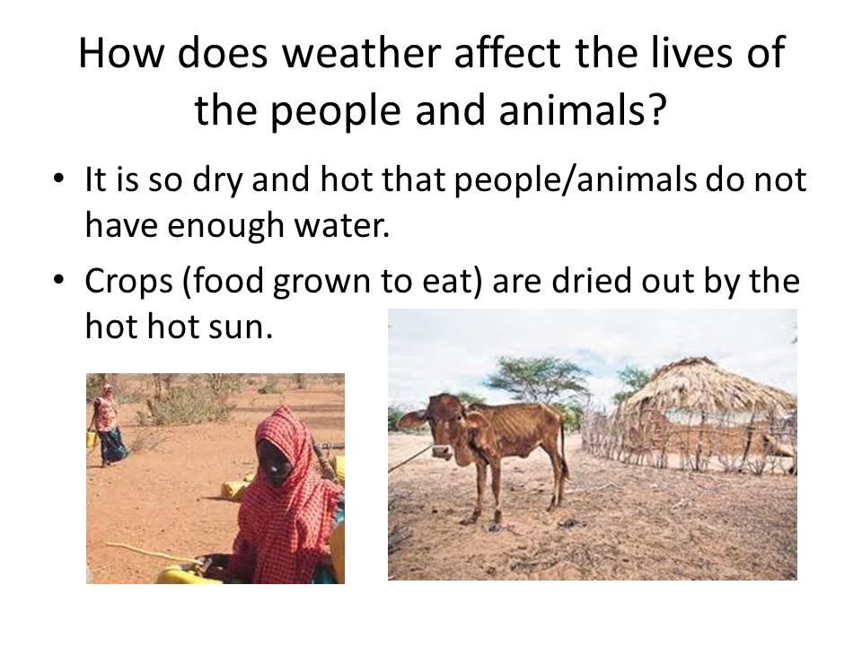 How does weather affect the lives of the people and animals.