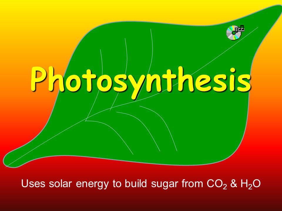 Photosynthesis Uses solar energy to build sugar from CO 2 & H 2 O