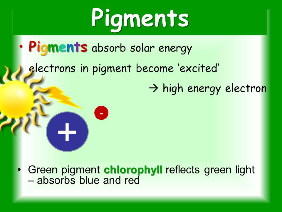Question 8 Plants gather the suns energy with light-absorbing molecules called a.