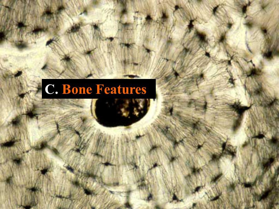 C. Bone Features
