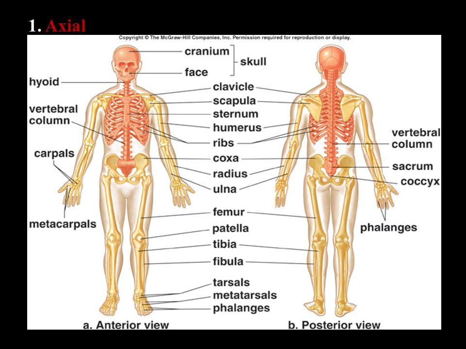 1. Axial