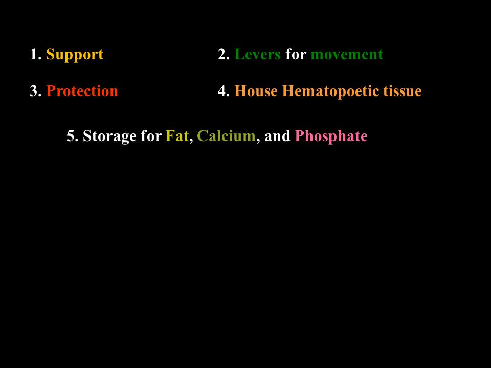 1.Support2. Levers for movement 3. Protection4. House Hematopoetic tissue 5.