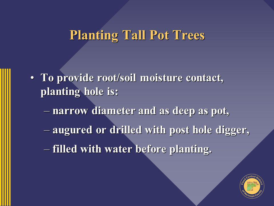 Planting Tall Pot Trees To provide root/soil moisture contact, planting hole is:To provide root/soil moisture contact, planting hole is: –narrow diame