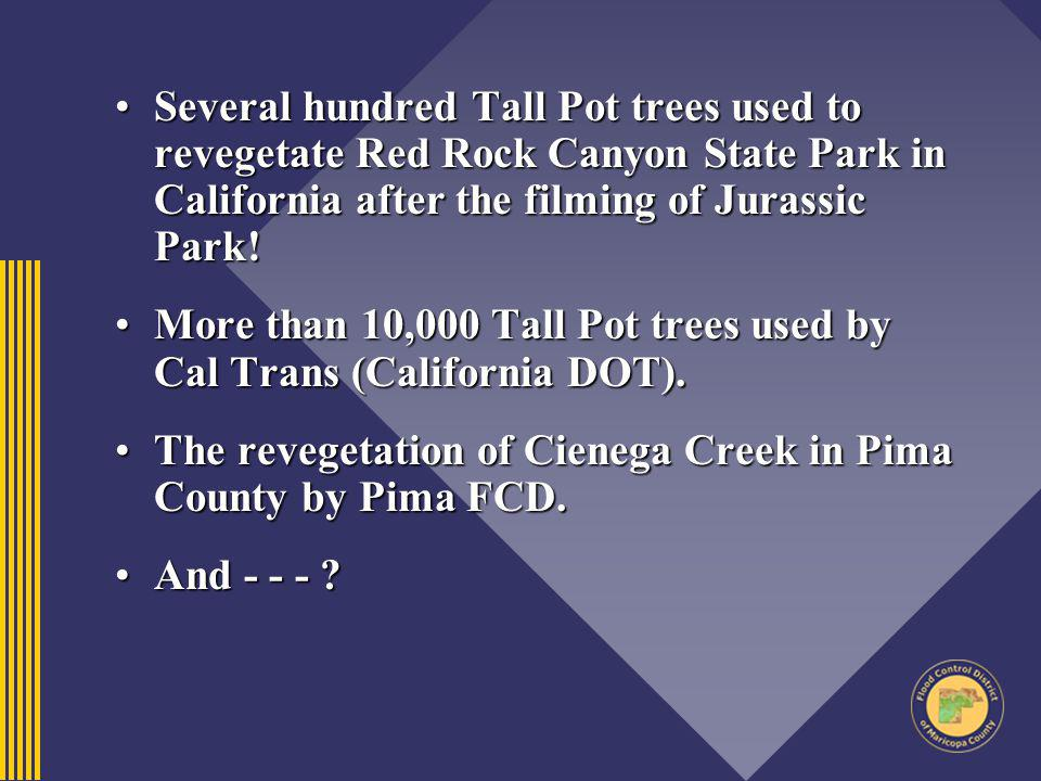 Several hundred Tall Pot trees used to revegetate Red Rock Canyon State Park in California after the filming of Jurassic Park!Several hundred Tall Pot